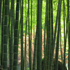 竹の向こうに