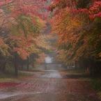 秋に染まる道