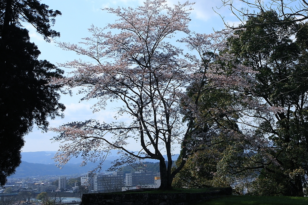 2010sakura
