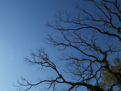 fractale & blue