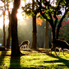 Three deer silhouettes