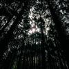 杉林の底から