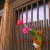格子窓の秋 II