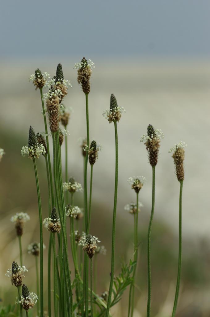 海辺に咲く花2