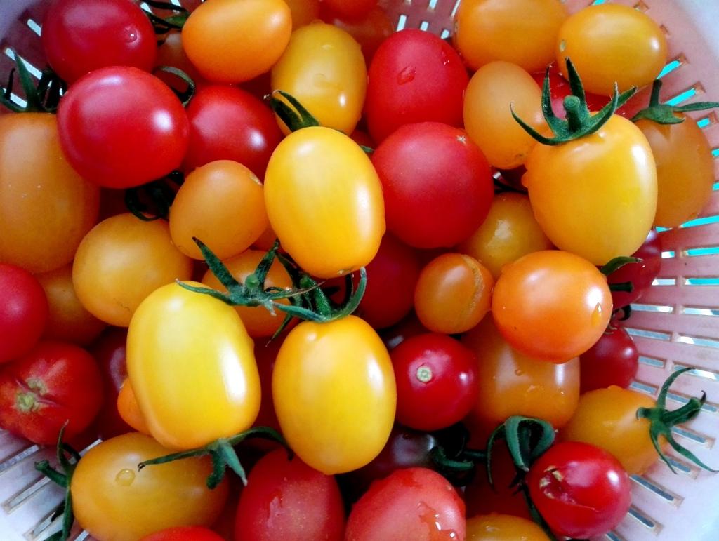 新鮮トマト