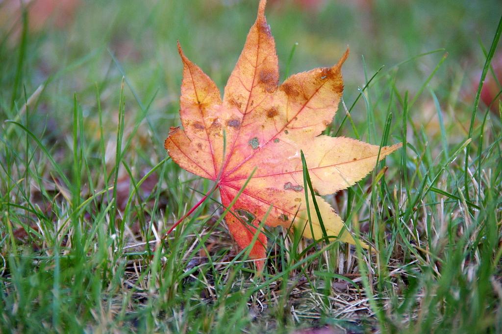 秋、見つけた