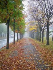 朝靄の並木道