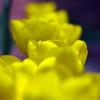 元気な黄色