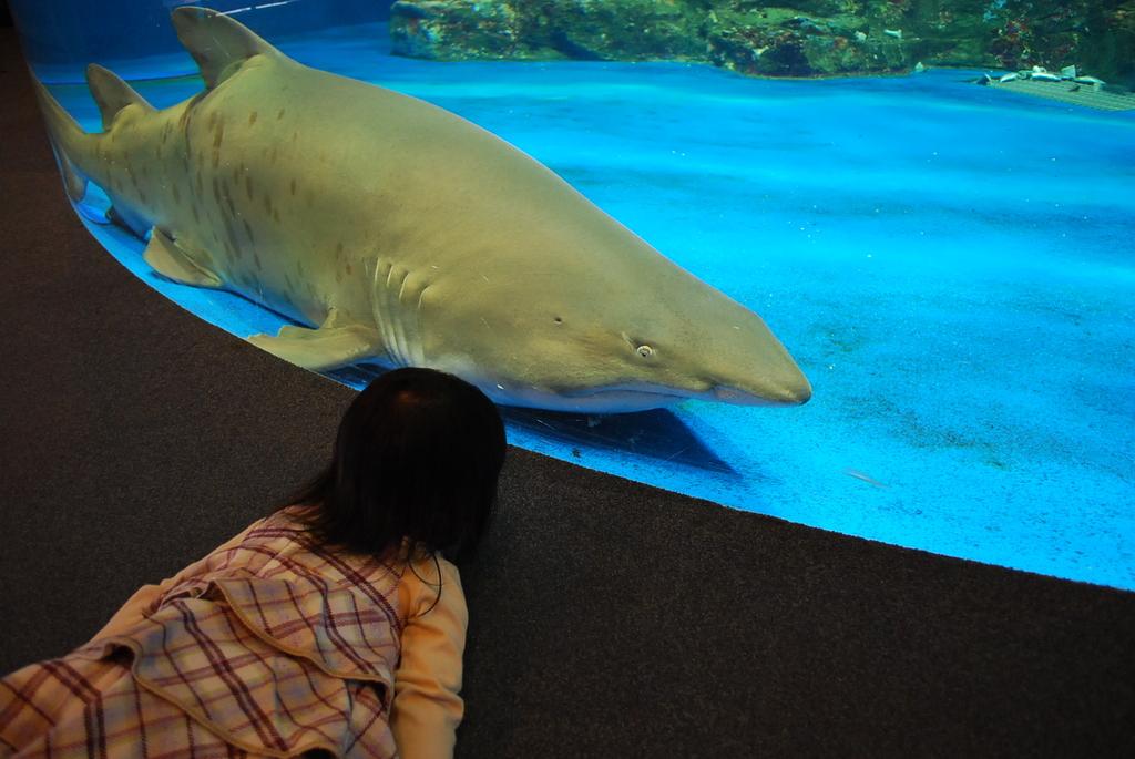 サメさんのきもち