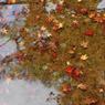 NIKON NIKON D200で撮影した風景(DSC_0040)の写真(画像)