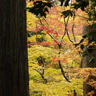 NIKON NIKON D200で撮影した風景(DSC_0075)の写真(画像)