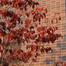 NIKON NIKON D700で撮影した風景(DSC_3429)の写真(画像)