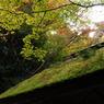NIKON NIKON D200で撮影した風景(DSC_0117)の写真(画像)