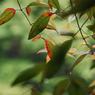 NIKON NIKON D200で撮影した風景(DSC_0155)の写真(画像)
