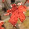 NIKON NIKON D700で撮影した風景(DSC_9166)の写真(画像)