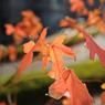 NIKON NIKON D700で撮影した風景(DSC_9164)の写真(画像)