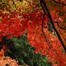 NIKON NIKON D200で撮影した風景(DSC_0065)の写真(画像)
