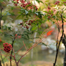 NIKON NIKON D700で撮影した風景(DSC_0295)の写真(画像)
