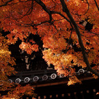 NIKON NIKON D200で撮影した風景(DSC_0247)の写真(画像)