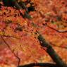 NIKON NIKON D200で撮影した風景(DSC_0062)の写真(画像)