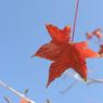 NIKON NIKON D700で撮影した風景(DSC_9169)の写真(画像)