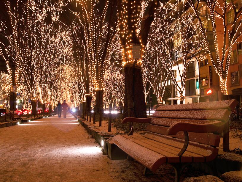 光の並木道