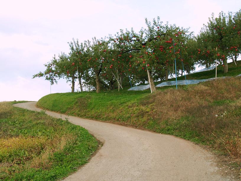 リンゴ畑に続く道
