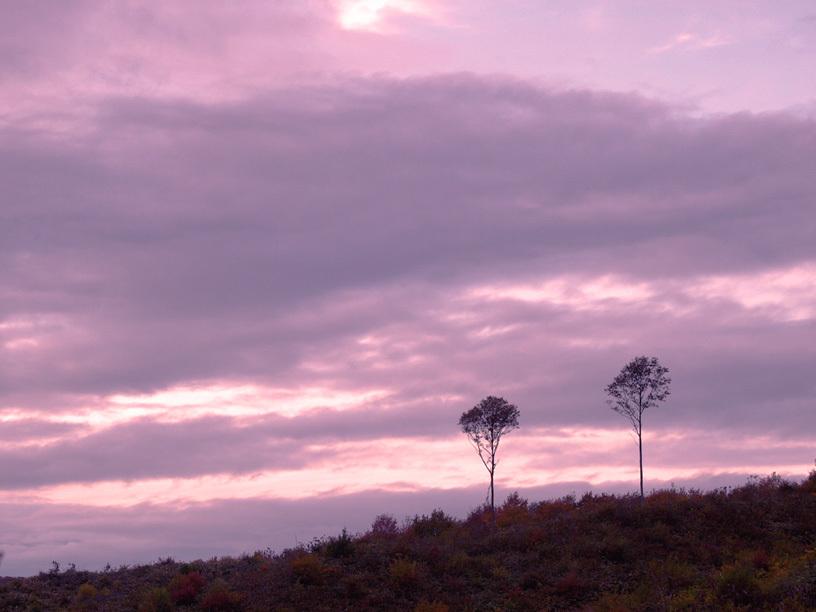 夕暮れの二本の木