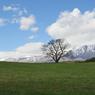 今日の小岩井農場 一本桜 2