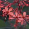 東山植物園:Butterflies