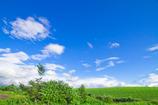夏空広がる丘