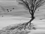 丘の孤木 2016 《M1、モノクロ版》
