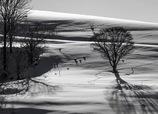 丘の孤木  2016   《G5 X版》
