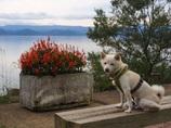 ナナ at 猪苗代湖