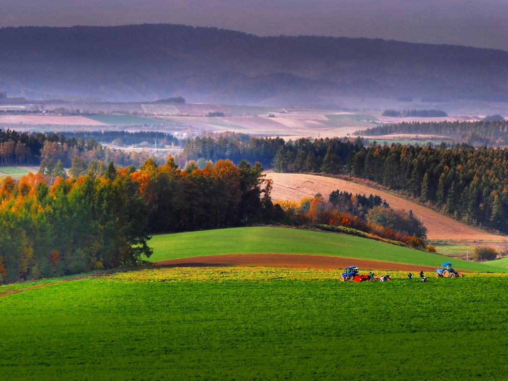 収穫のとき-北の大地 2013