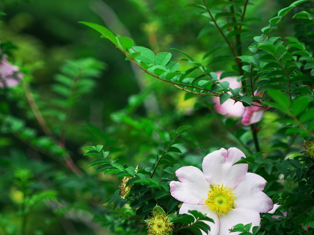 いにしえの花