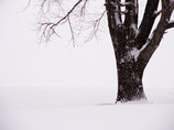 君に掛かる雪・・・