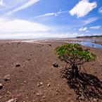 OLYMPUS E-P2で撮影した風景(潮を待つ)の写真(画像)