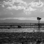 NIKON NIKON D800Eで撮影した風景(ヒルギの夏-2012 石垣)の写真(画像)