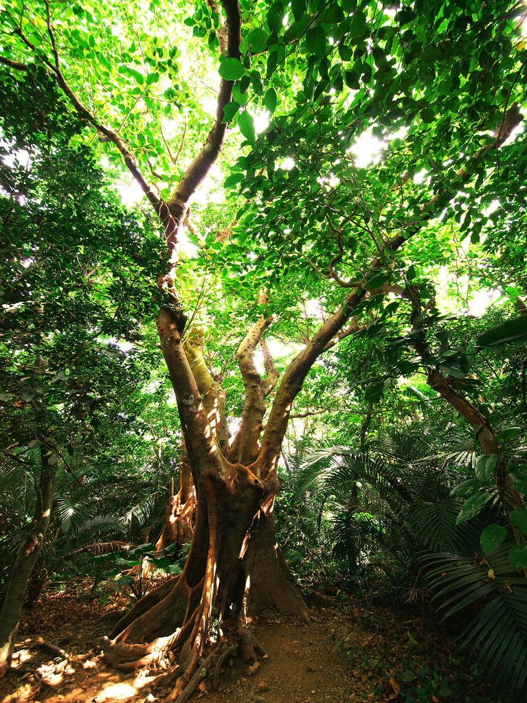 森に生きる