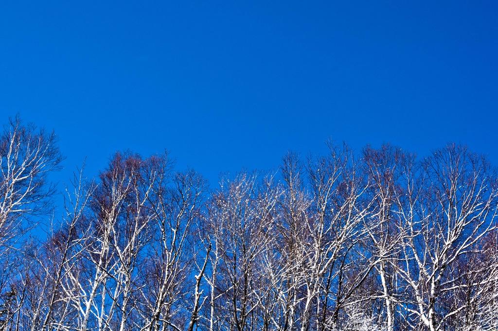 スカイブルーの冬