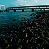 a small bridge floating on the sea.