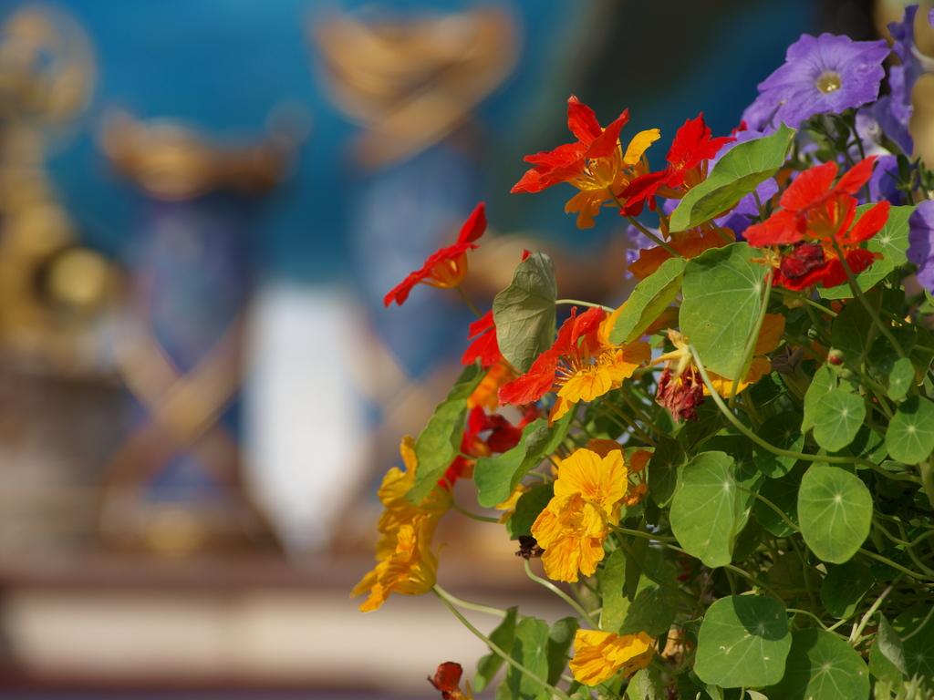 どこに咲いている花かわかるかな?