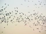 夕暮れの蝙蝠_03