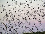 夕暮れの蝙蝠_05