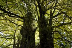 巨木の空間