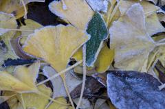 秋の終わり、冬の訪れ
