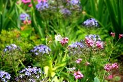 花にとまる蝶