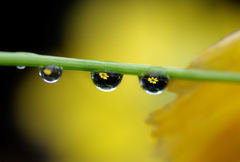 水滴の中に咲く花