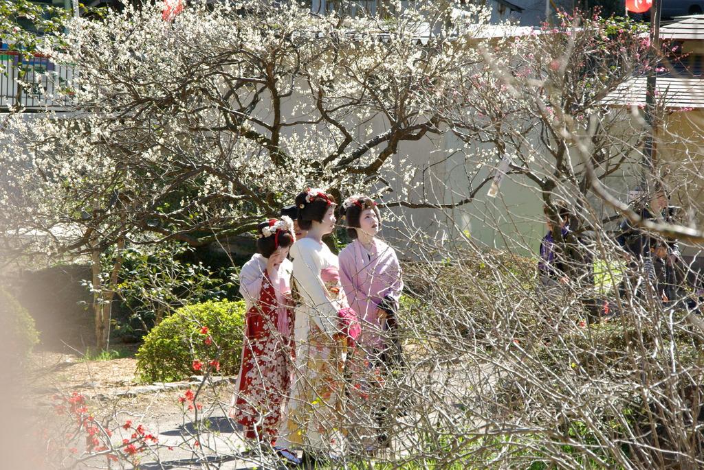 熱海 梅祭り